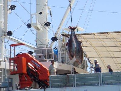 tuna-blog-785214